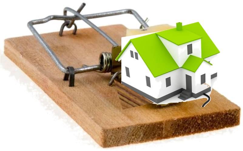 House mouse trap - photo#4