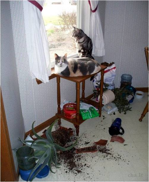 cats left alone